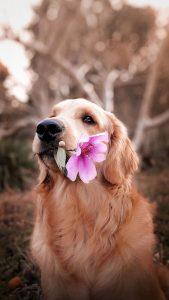 Kremacja psa- jak wygląda?